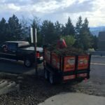 landscape-cleanup